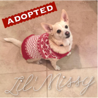 Foster Dog - Missy - Adopted
